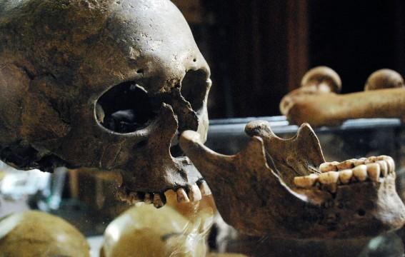 Egészségesebb fogaink voltak a kőkorszakban