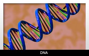 Sokat fejlődtek az orális baktériumok az évezredek alatt