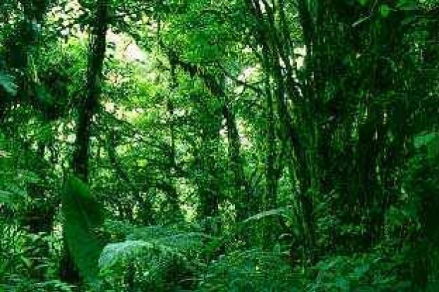 Fogfájás-csillapító gyógyszer az esőerdőből