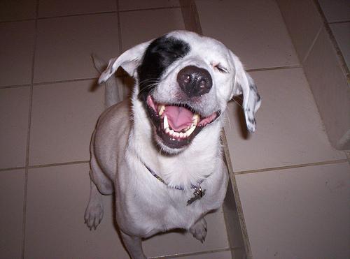 A kutyáknak is szükséges a fogmosás