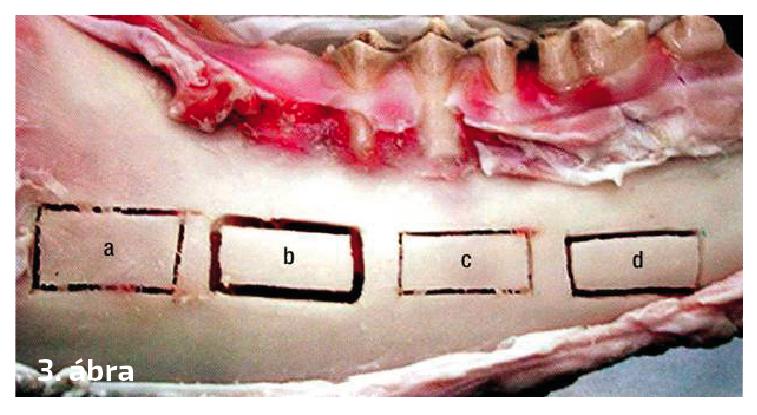 3. ábra: Vágási szélességek, csontveszteség (a = oszcillációs fűrész 0,5 mm, b = gyémánt gömbfúró 1 mm, c = piezo 0,2 mm, d = vídia fúró 0,6 mm)