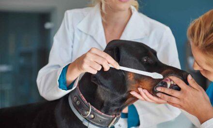 Új fogfehérítő krém a piacon: célkeresztben a kutyák
